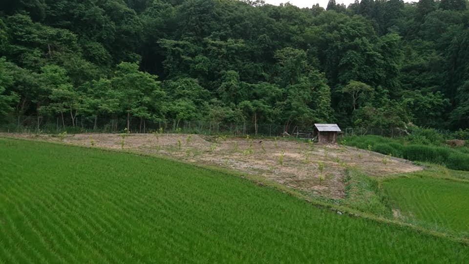 耕作放棄地再生事業